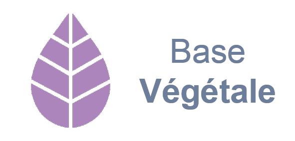 BASE600-2.png